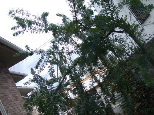 木が倒れるぞおおおおおおおお~~~~ぉぉぅぉぅぉぅ~~~