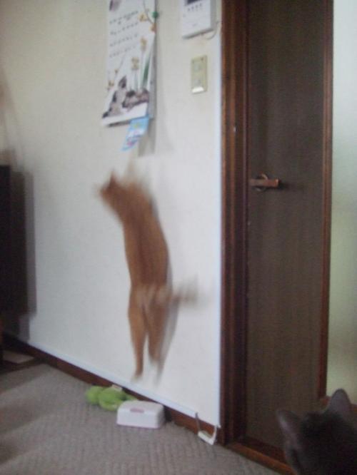 ジャンプ~♪