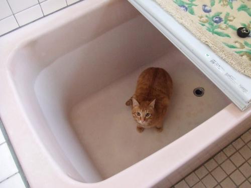お風呂場大好きさ~~~