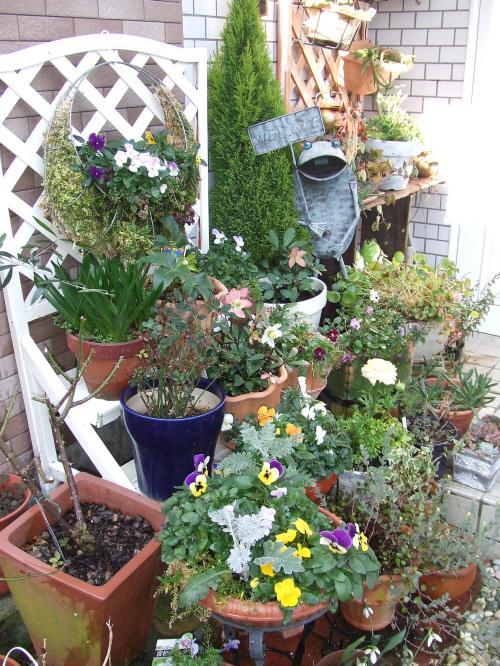 玄関の鉢たち
