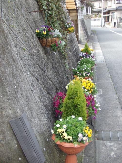 道路沿いの花たち