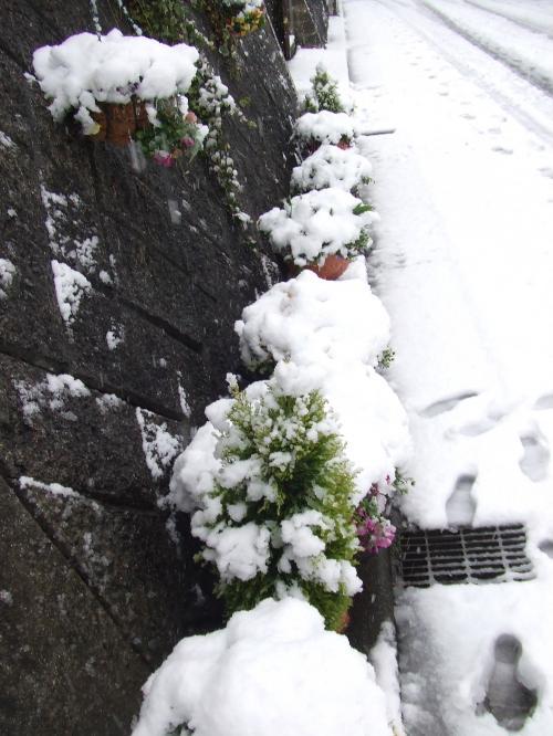 雪かぶりの道路沿いの花~