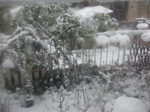 ソケイの枝も雪もぐれ~~