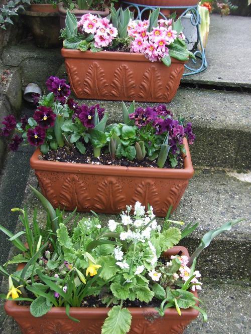 門前の階段の花