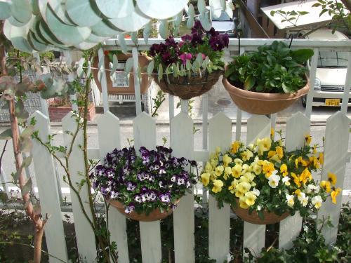 ハンキングの花たち