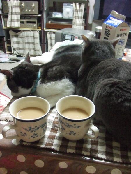 食後のお茶タイム・・・って猫のかい~~