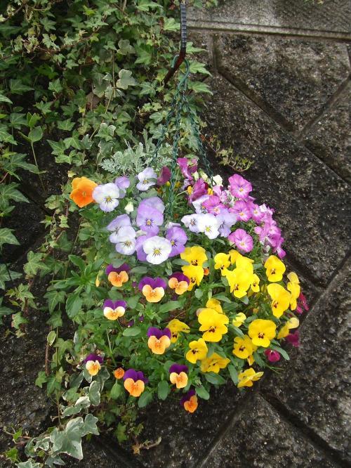 ハンキングの花