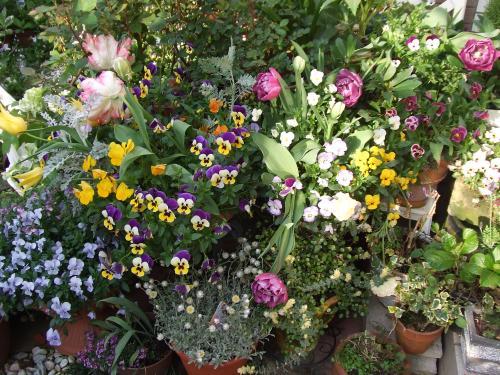 もさもさ咲いてるコーナー