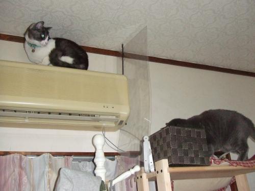 登ったよ・・・台所側からジャンプでした(^^)