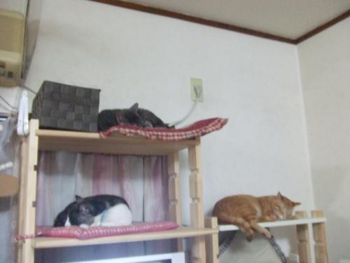 仲よし猫タワー兼パソコン台