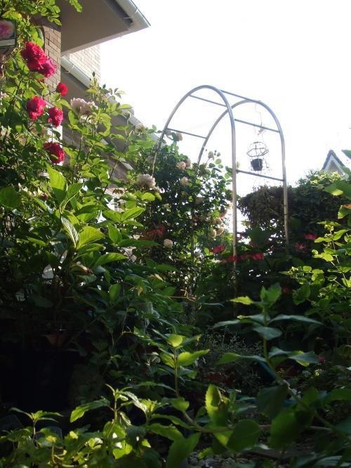 もっさもっさの庭・・・