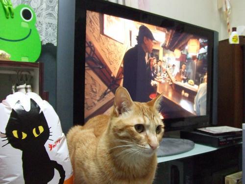 お友達と吉田さんと茶とらん
