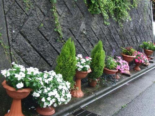 覇気のない道路沿いの花たち