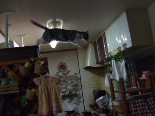 食器棚からジャンプ