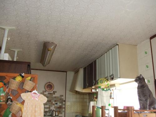 あこがれの食器棚の上