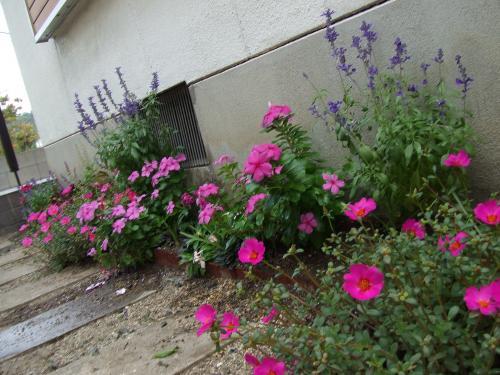 キムノブ実家の花壇