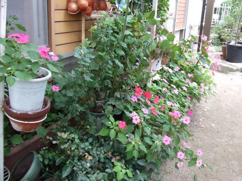 キムノブ実家の庭