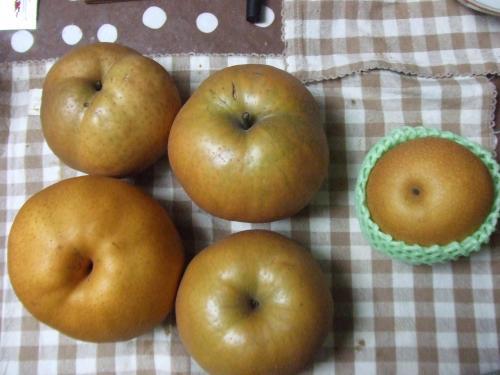 普通の梨と比較