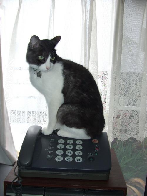 辰さん そこは電話の上だし・・・(--;