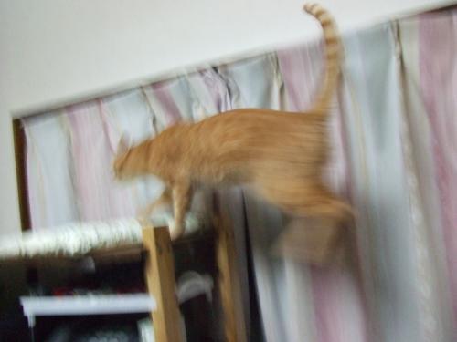 ジャンプ!!って・・・テレビが踏み台かい・・・