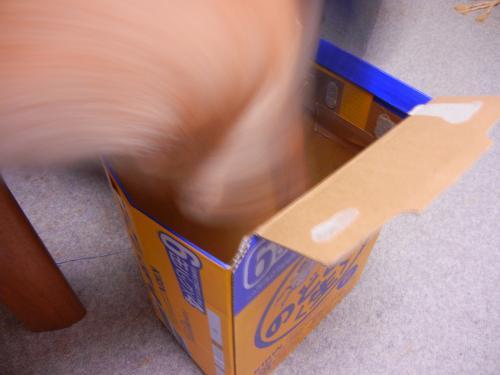 ビール箱へジャンプ