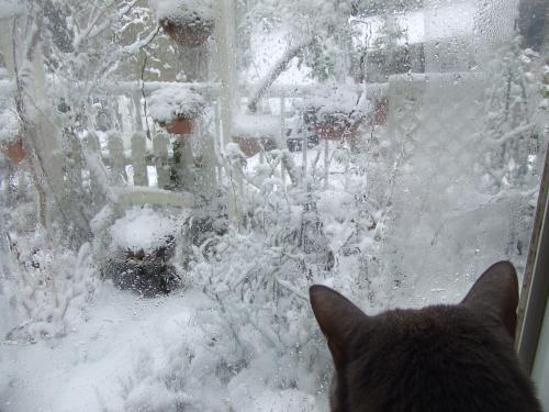 ふうちゃんも雪見猫