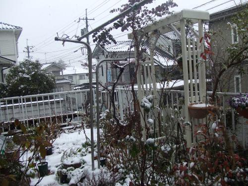 2月14日の庭