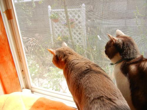 和室の窓から仲良くにゃんこ^^