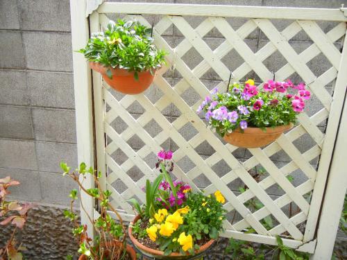 壁掛けの花