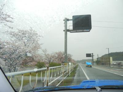 三刀屋町の桜並木