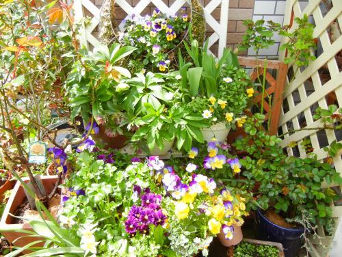 玄関前の鉢たち