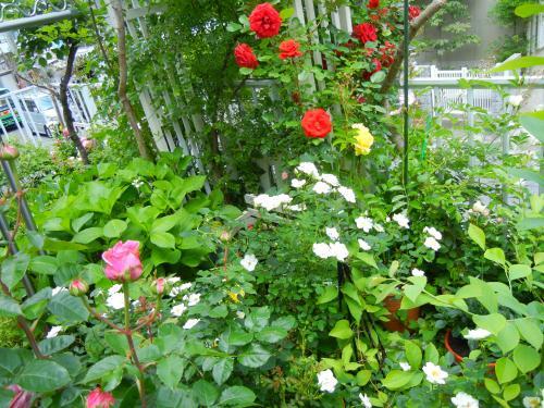 雑然とした お庭さん