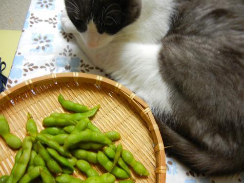食卓から降りてよ~辰さん・・・。