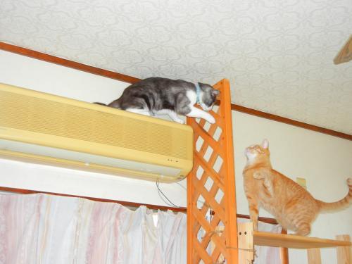 茶と坊さんだって 登りたい!