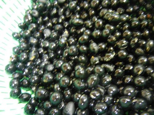 もらったの~^^畑で採れた黒豆