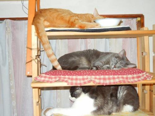 お猫様タワーマンション