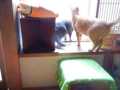 和室の窓辺