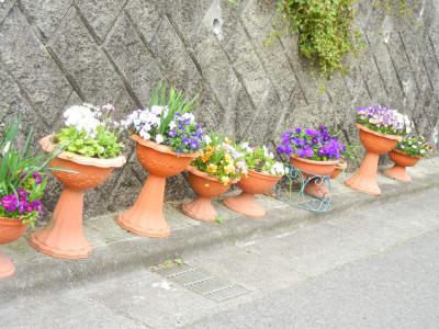 お外の鉢たち