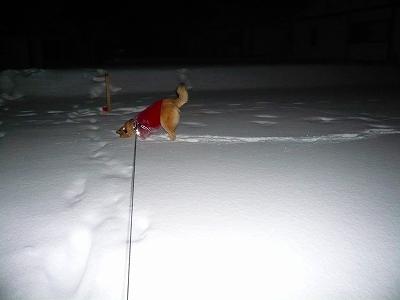 雪、きもちイ~♪