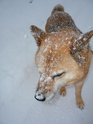 雪、降ってるね~