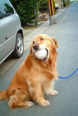 ボール命♪