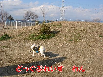 DSC07834.jpg