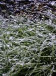 071119_snow.jpg