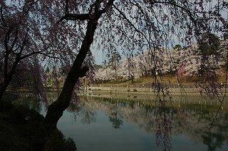 2009-04-13-019-花簾