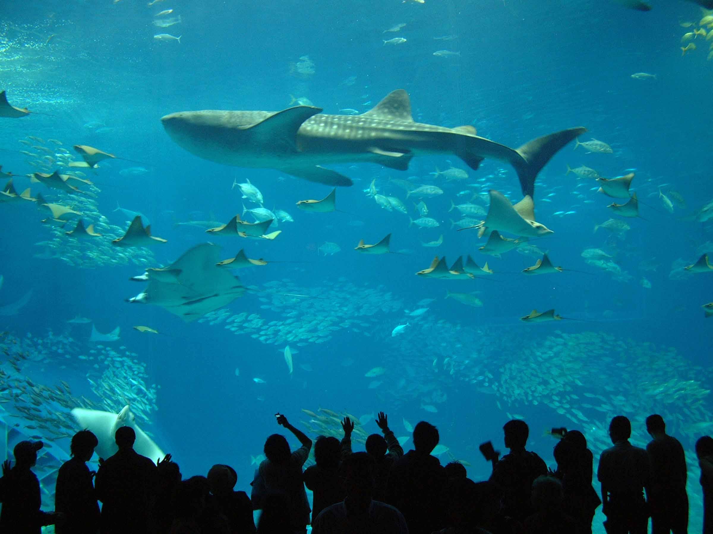 本部グリーンパークホテル&ゴルフ場 ブログ : 2月の沖縄美ら海水族館情報^