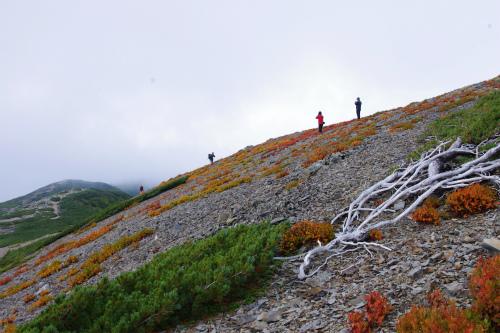 蝶ヶ岳 053