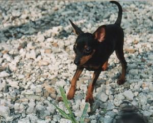 初めて会った次男犬01年夏