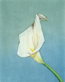19941020メイプルソープの花 模写