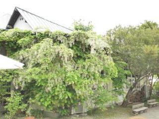くるみの木3