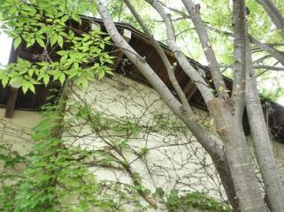 くるみの木5
